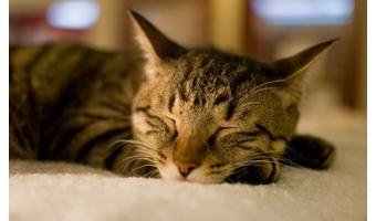 寝ても疲れが取れないのは交感神経が優位だから