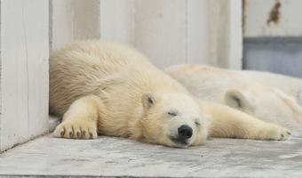 寝ても疲れが取れない原因はリラックス